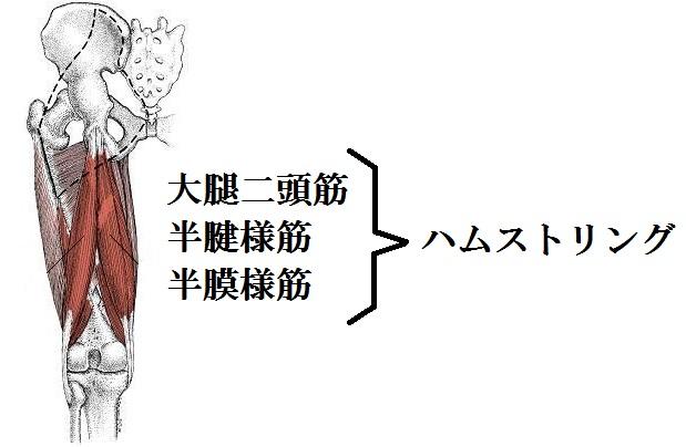 ハムストリングの図