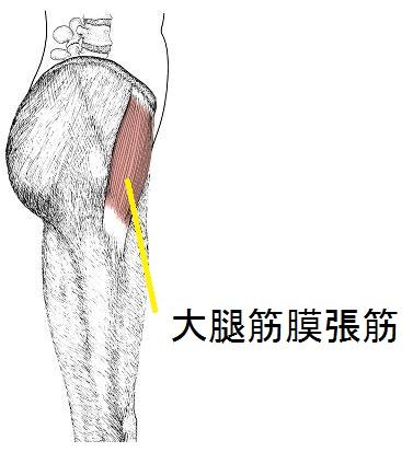 大腿筋膜張筋の解剖図